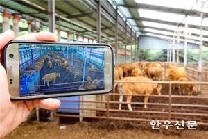 경기, 250억원 투자'축산 ICT 융복합 확산사업' 추진